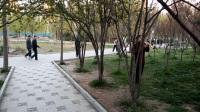 萨克斯《敖包相会》,定州中山公园萨克斯云晨练,2017,4,1,VID_20170401_061915