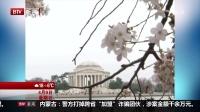 都市晚高峰(下)20170409美国华盛顿樱花节大游行隆重上演 高清