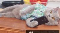 猫星人用了社交软件,后果很严重