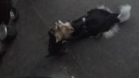 母狗和小狗玩。。