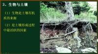 高中地理 土壤形成影响因素.mp4