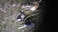 又是打猎,保护动物人人有责