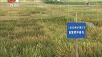 张理高:一人带出六千水稻制种大军 江西新闻联播 170430