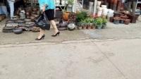 多肉植物种植教程植物大战僵尸西游版视频