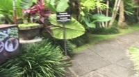 巴厘岛蜜月旅行