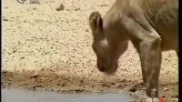 动物世界厮杀