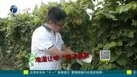 滴滴果园:七里海玫瑰香葡萄