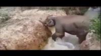 芳芳视频 动物世界