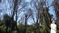 自然风景动态图片