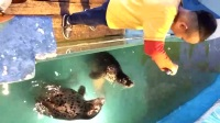 海立方~海狮1