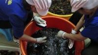 洗虾-备用