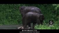 2017 动物世界的母爱,感动人心 微信 13161051542