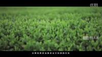 日照绿茶官方宣传