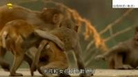 【纪录片(动物世界)】动物师奶(粤语)-01