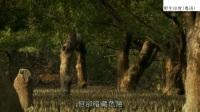 【纪录片(动物世界)】野生印度(粤语)-06[完]