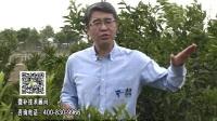 20170529珠江台摇钱树:贡柑蜜柚喷施微补盖力+硼力,预防减少缺硼钙裂果视频