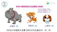 兽医小明:幼犬没有饱腹感怎么喂?2分钟学会幼犬每天应该吃多少!