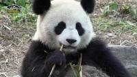 熊猫剧场04