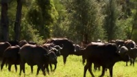 世界致命动物04:非洲