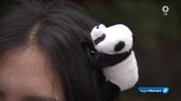 Berlin Zoo panda