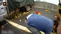 高速口小货车相撞, 车上6000只鸭鹅集体越狱, 遭碾尸横遍野