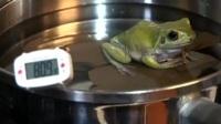 温水煮青蛙: 加热锅里的水, 青蛙会跳出来吗?