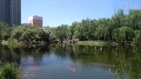 太原龙潭公园数千条锦鲤列队向前,朝同一个方向转圈…什么情况?