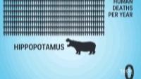 全球最危险动物排名