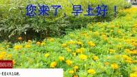 """《潇潇艾尔秀乐国》""""讲礼貌的小白蝴蝶""""1098p(专业版)微视频。乐秀视频第84部_20170702120837411"""