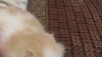 宠物店叫什么名字好★淘宝店铺搜:双飞猫