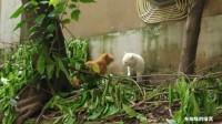 两猫茬架,最后结局你绝对猜不到