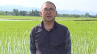 《�r�I�^察》第五期(水稻病�x害防治)2017518��l