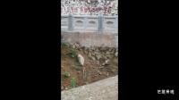扇形仿石栏杆 仿石护栏 成功案例 制作安装效果图片集