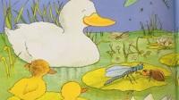 亲子阅读英文绘本Five,little,ducks,帮鸭妈妈一起来找小鸭子