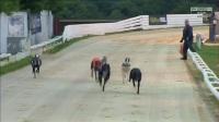 格力犬联盟网视频 - 英国威廉希尔大奖赛决赛视频