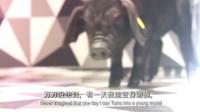 华帝家电×味央猪肉【上海时装周惊爆跨界】