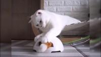 没有条件养两只猫? 体验不到互相玩尾巴的快乐? 给你家喵星人准备这样一个玩具