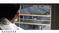 【黄子韬 杨采钰】追光者——《夏天十九岁的肖像》