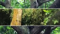 IM 2017 Singapore Study Tour Singapore Zoo 新加坡动物园