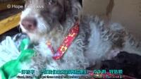 【希望之爪】无家可归的狗妈妈和9只狗宝宝的救助故事 @柚子木字幕组