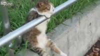 【藤缠楼】搞笑动物!坐在球场边上看球的懒猫