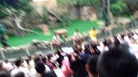 长隆野生动物园动物表演