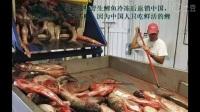 """亚洲鲤鱼在美国已经无敌了,当地政府宣布放出""""大杀器""""鳄雀鳝"""