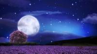 SP0077-夜晚闪烁星星空下一轮圆月亮大树梦幻唯美演出LED背景视频素材