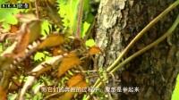 【链器道人】BBB纪录片频道 进击的蚂蚁大军