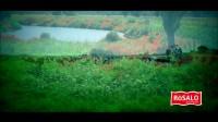 2017年微猴科技制作禄美多奶粉宣传视频