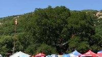 宝力根寺偶遇的有木有