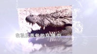 大鳄生物官方宣传视频