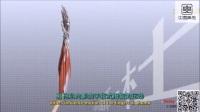 人体手掌解剖3D动画
