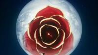 天然红色镀金玫瑰花—生日表白礼物